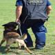 Police Searches with a Drug Sniffer Dog photo